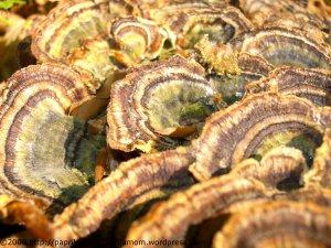 Buntes Pilzdach an Buchenstumpf