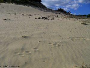 Offene Düne mit Ameisenlöwentrichter