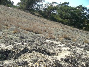 Sandtrockenrasen